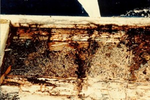 about_termite_img017